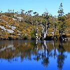 Artist's Pool - Cradle Mountain and Lake St Clair National Park, Tasmania by Ruth Durose