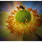 Illuminant..flying ant that is... by Elaine Game
