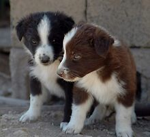 Puppies by Vendla