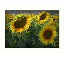 Sun...sun...Sunnnnnflowers Art Print