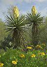 Yuccas, Texas by Tamas Bakos