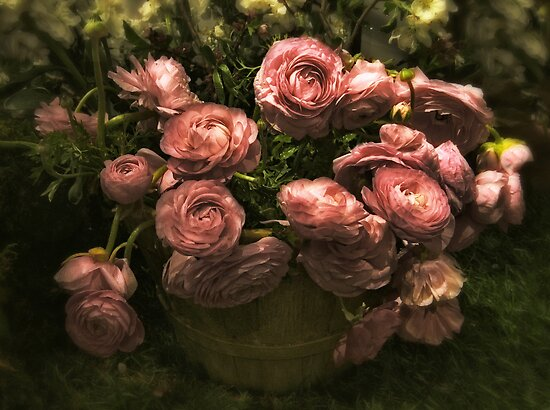 Romantic Ranunculus by Jessica Jenney