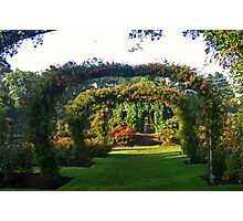 Rose Promenade, Elizabeth Park, West Hartford, CT Photographic Print