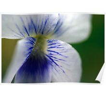 White Violet - Close Up Poster