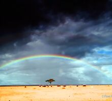 The Rainbow by Pam Moore