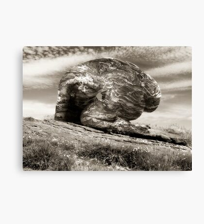 And A Rock Feels No Pain Canvas Print
