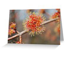 Spring Fireworks II  (Maple Tree) Greeting Card