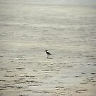 Mr. Lonely by Rahul Joshi