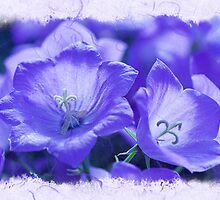 I Sing of Spring by Marilyn Cornwell