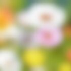 Blury flowers 2  [  All Products ] by relayer51