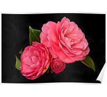Camellia Study Poster