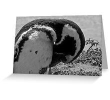 Pinguin - Puerto Madryn, Argentina Greeting Card