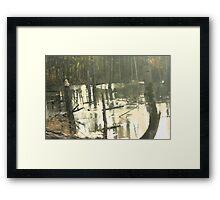 in the swamp Framed Print