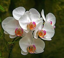 Orchids (HDR)  by ECH52