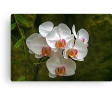 Orchids (HDR)  Canvas Print
