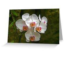 Orchids (HDR)  Greeting Card