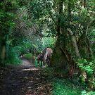 Forest Ponies by Ann Garrett