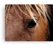 Eye of the Equine Canvas Print