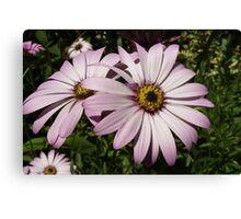 Double Daisy Canvas Print