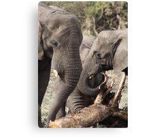 elephants 2 Canvas Print