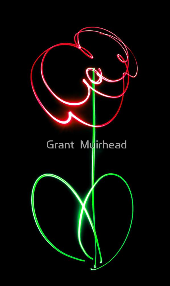 Poppy by Grant  Muirhead