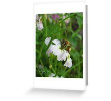 Flower Bees Greeting Card