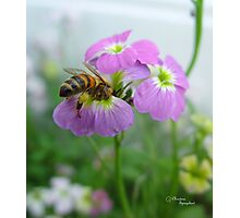Yummy Pollen - Bee on Flowers Photographic Print