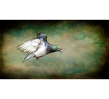 Stop That Pigeon. Photographic Print