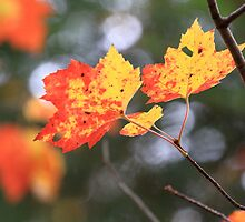 Fall Leaves 3 by hkusp40