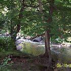 Creek Peek by willette