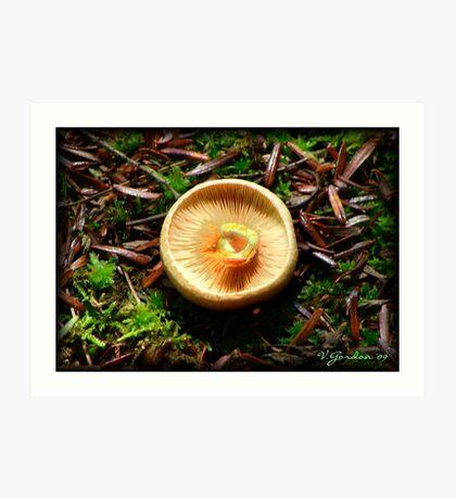 Mushroom Cap Art Print