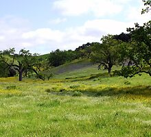 Meadow off Figueroa Road, California by Renee D. Miranda