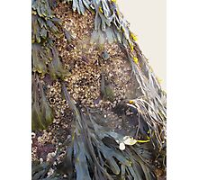 Tiny Barnacles Photographic Print