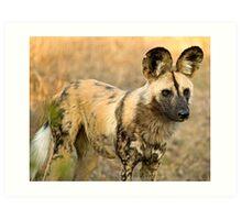African Wild Dog Close Up Art Print