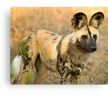 African Wild Dog Close Up Canvas Print