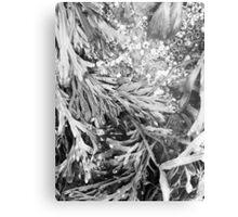 Sea Greens Metal Print