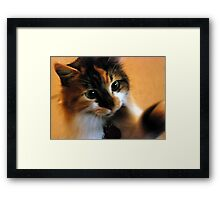 Calico Cat with Dilated Pupils Framed Print