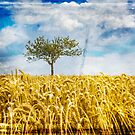 Single tree in a wheat field by Dave Hare