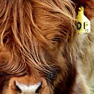 Wee Calf by Kirsty Auld