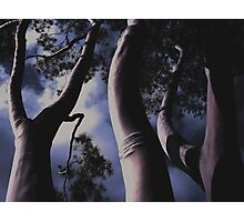 'Land Of The Giants' - Fitzroy - Melbourne Australia - 2007 Photographic Print