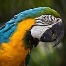 MaCaW by Lisa  Kenny