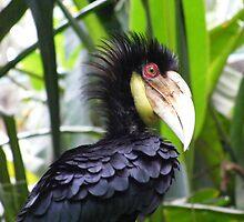 very cool friendly bird, Bali zoo by Cynthia Fletcher