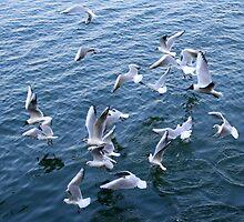Seagulls Ballet by Segalili