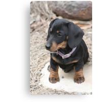 Dog on a Rock Canvas Print