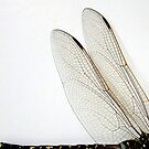 Dragonfly Wings by Bevellee