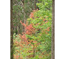 Taste Of Autumn Photographic Print