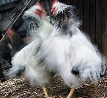 Chook House Brawl by Leanne Robson
