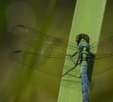 Pond Jewel - Blue and Green Dragonfly Sticker