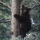 Alaskan Brown Bear Cub in Tree by Wayne Hughes
