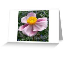 Fall Anemone Greeting Card